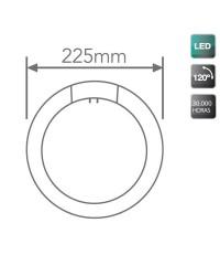 Tubo LED circolare G10q Ø225mm 12W 960LM 6500K 120º