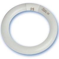 Tubi Fluorescenti circolari